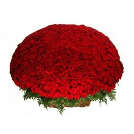1001 троянда