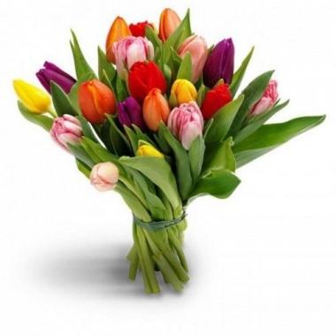 15 тюльпанів