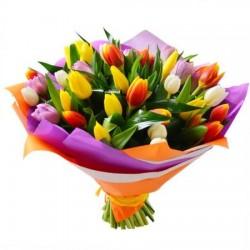 25 тюльпанів